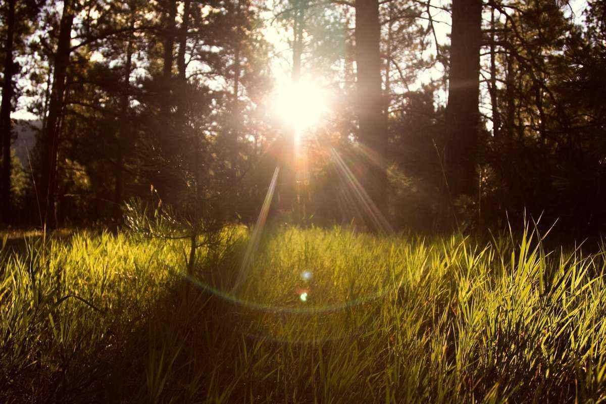 утро, трава, рассвет, солнце, лучи, деревья