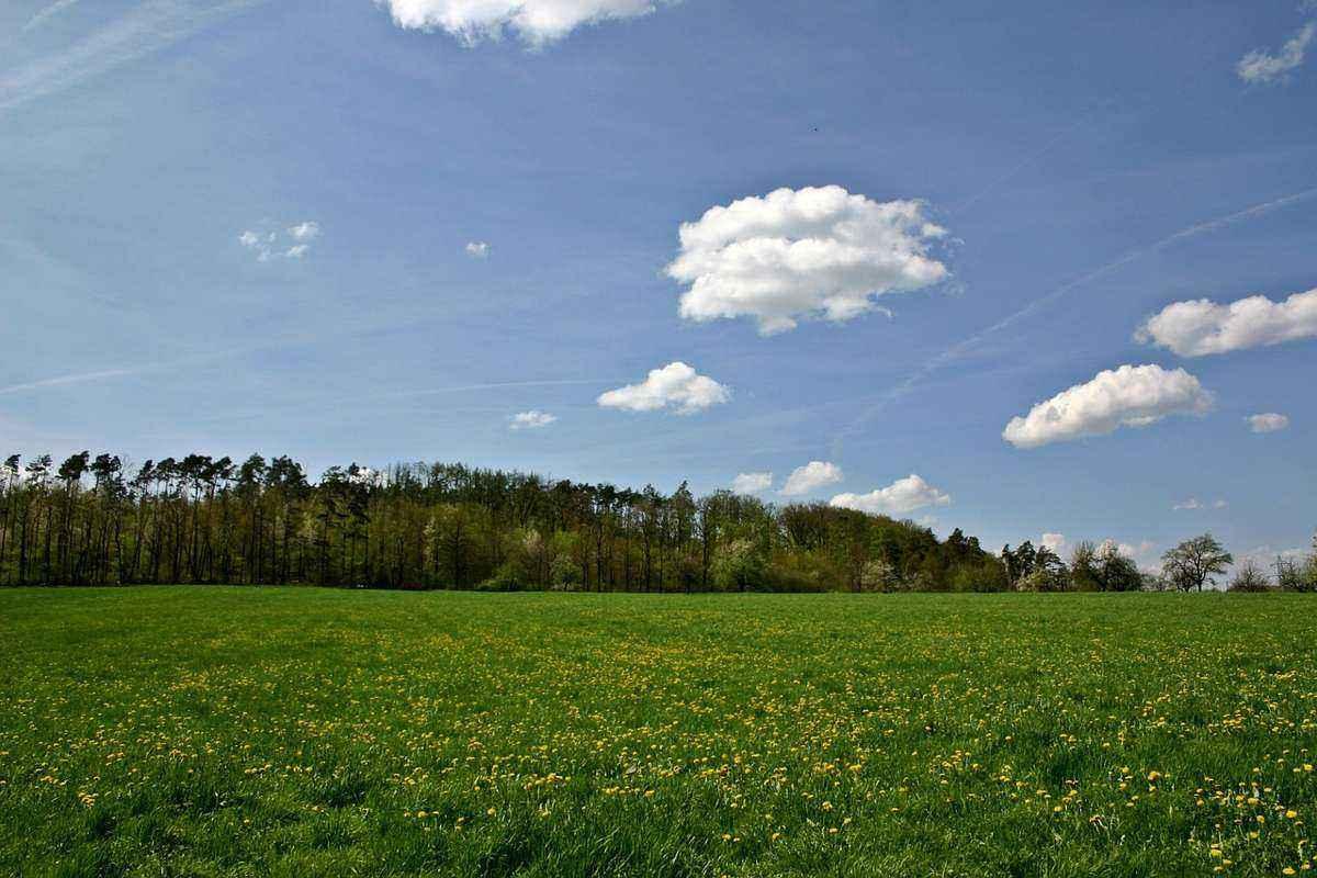 пейзаж, небо, облака, лес, поляна, зеленая трава, полевые цветы
