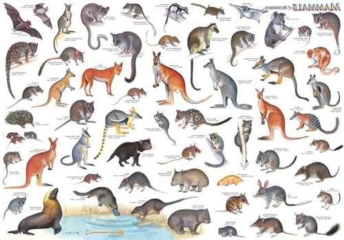 видовое разнообразие млекопитающих