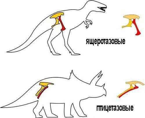 ящеротазовые-и-птицетазовые-динозавры
