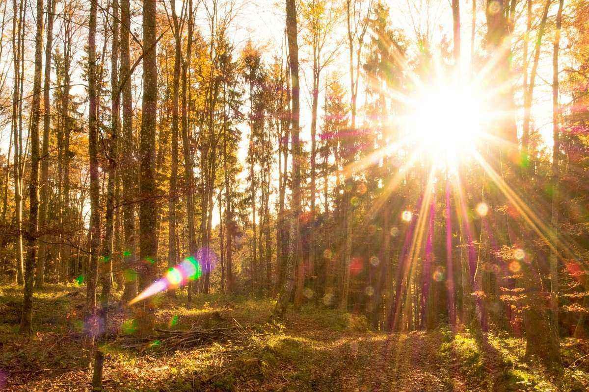 закат, солнце, лес, осень, деревья