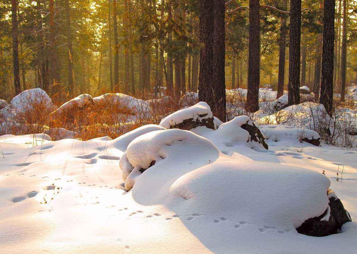 зима, снег, закат, в лесу