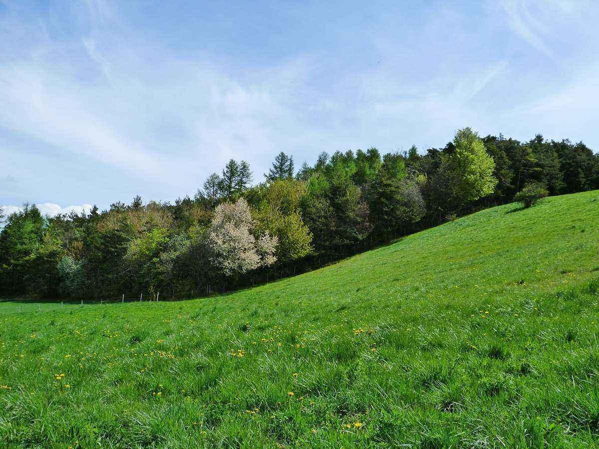 зеленый холм, склон, лес, деревья, небо