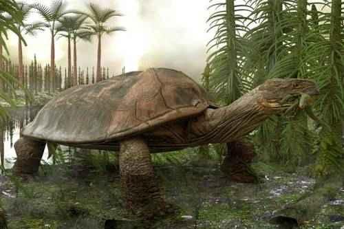 Гигантская черепаха Carbonemys