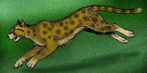 Мирациноникс (Американский гепард)