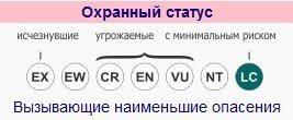 obyknovennaya-rys-ohrannyj-status