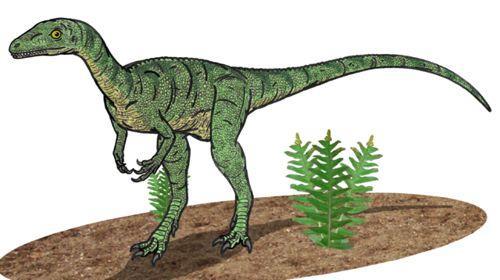 ранний динозавр Эораптор (Eoraptor)