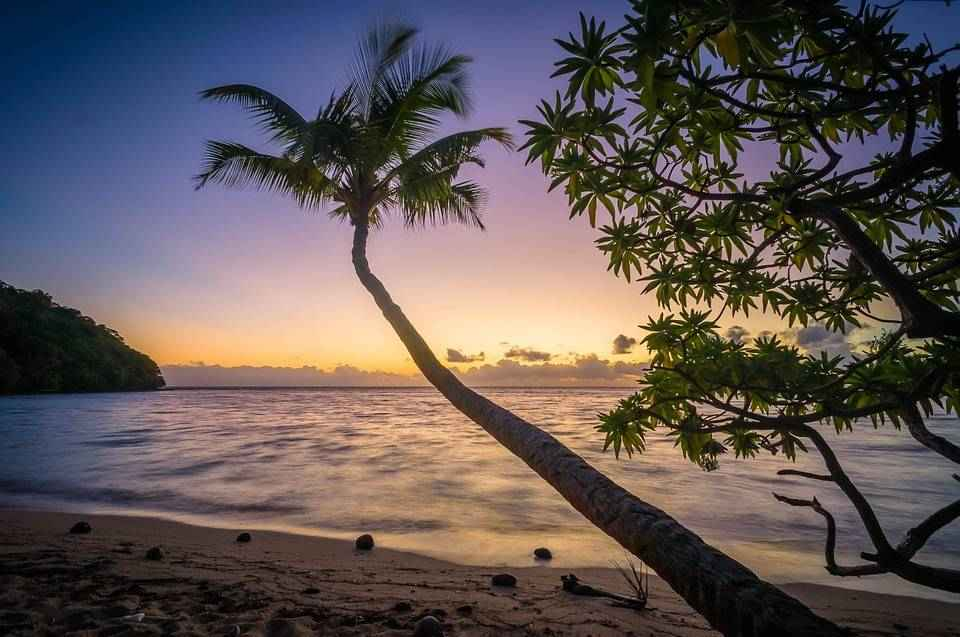dlinaya-palma-vecher-zakat-plyazh-more-okean