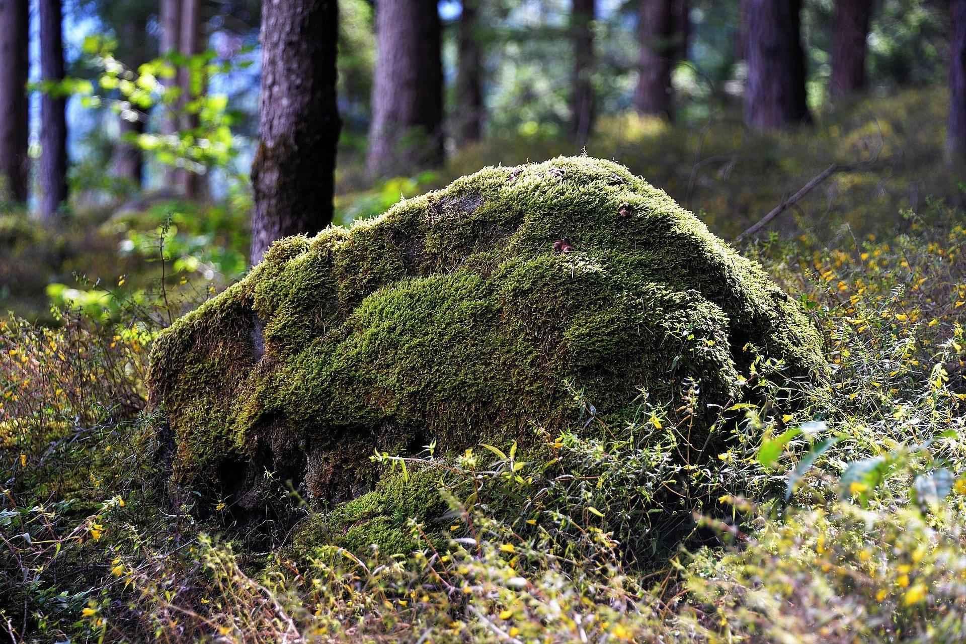moh-na-kamne-v-lesu