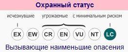ohrannyj-status-chernogo-medvedya