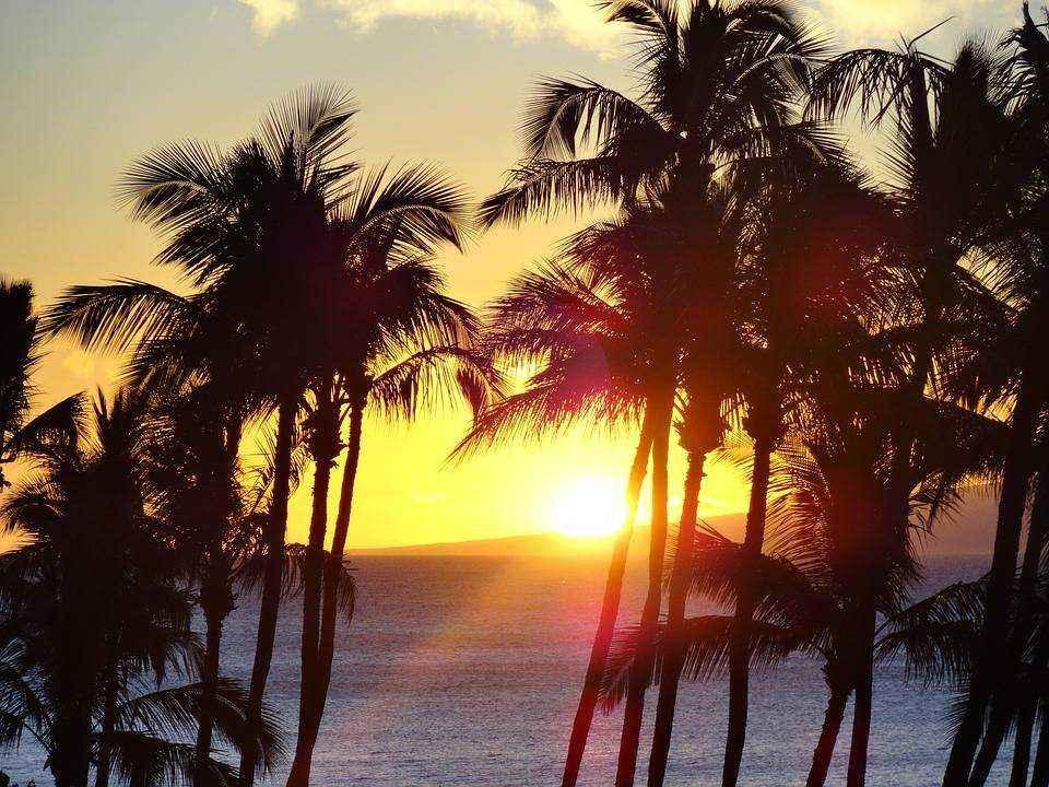 okean-plyazh-vecher-zakat-zahod-solntsa-oranzhevoe-nebo-palmy