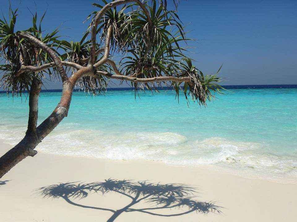 okean-prozrachnaya-voda-pesok-palma-sinee-nebo