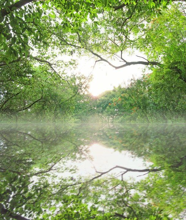 отражение зеленых деревьев в утренней реке