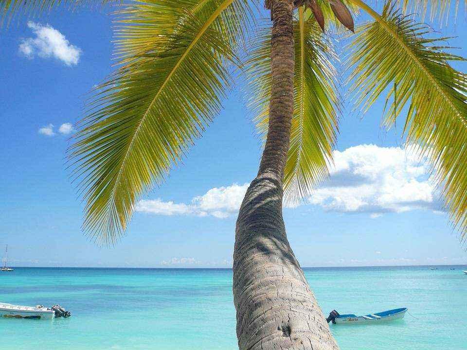 stvol-palmy-goluboj-okean-lodki-nebo-leto