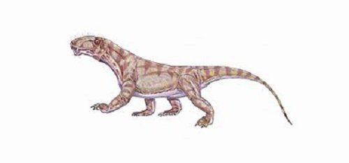 тераспид Биармозух (Biarmosuchus tener)