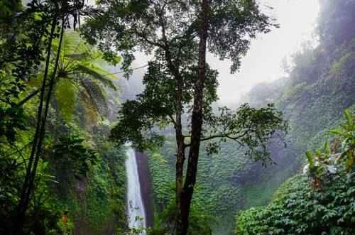 тропический дождевой лес