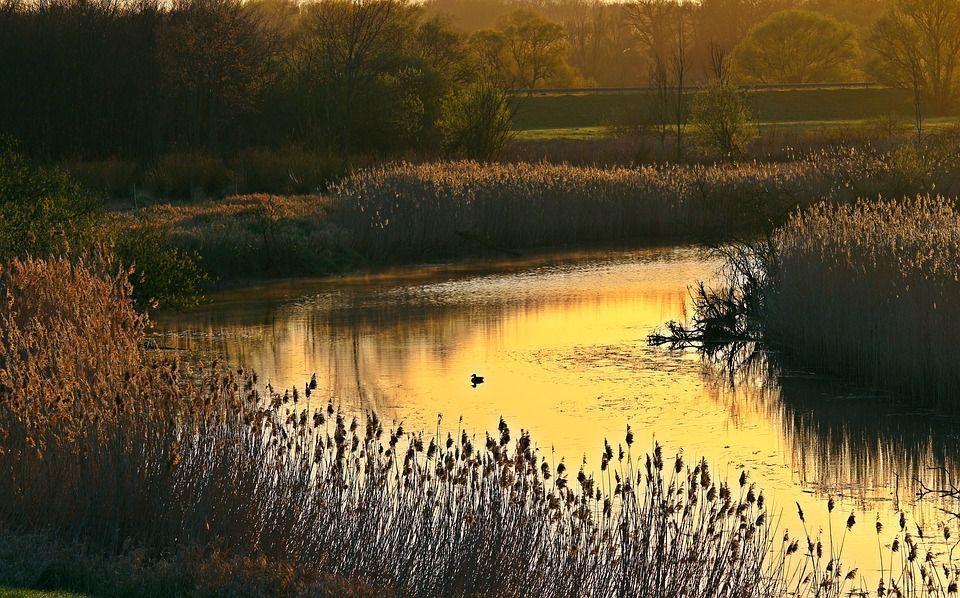 утро, река, рассвет, утка