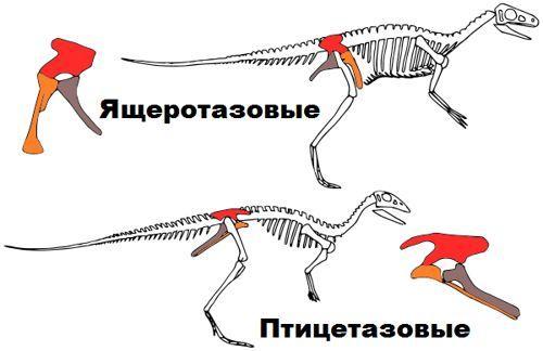 ящеротазовые и птицетазовые динозавры