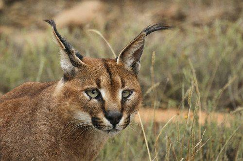 Фауна Египта - Какие животные обитают в Египте? 9