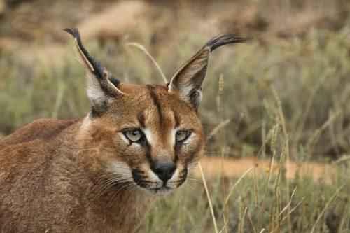 Какие животные обитают в Казахстане? 8