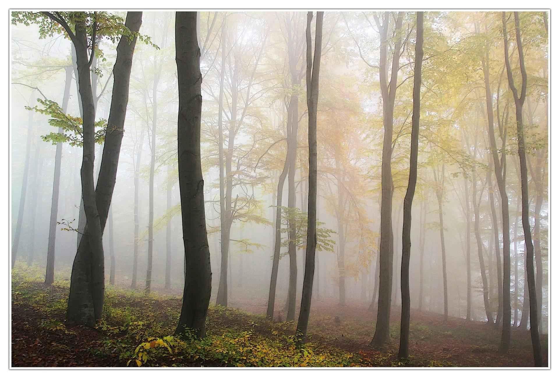 лес, туман, осень, утро, деревья