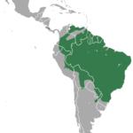 онцилла, ареал обитания, распространение, диапазон