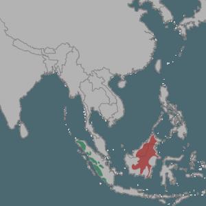 areal-bornejskogo-ili-kalimantanskogo-dymchatogo-leoparda
