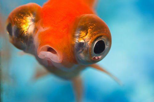 glaza-ryb