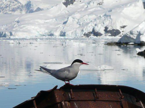 antarkticheskaja-krachka