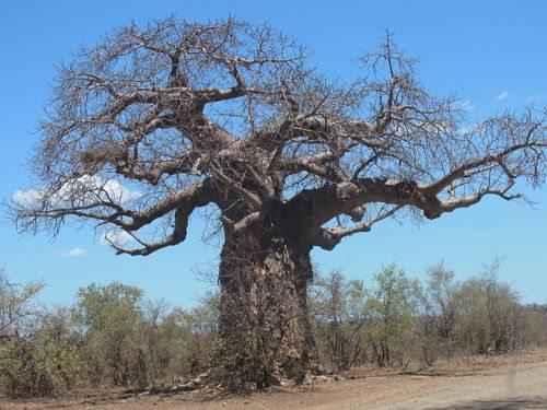 Характеристика, животный и растительный мир саванны Африки 12