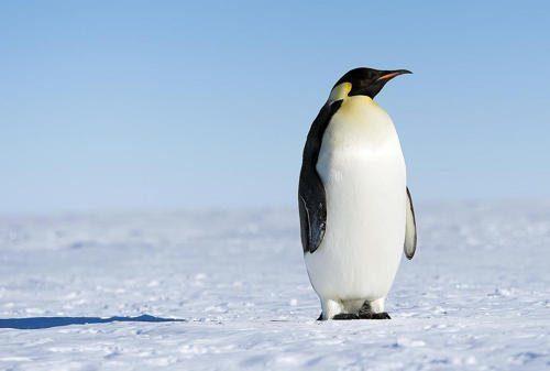 Животные холодных районов Земли — характеристика, интересные факты и фото