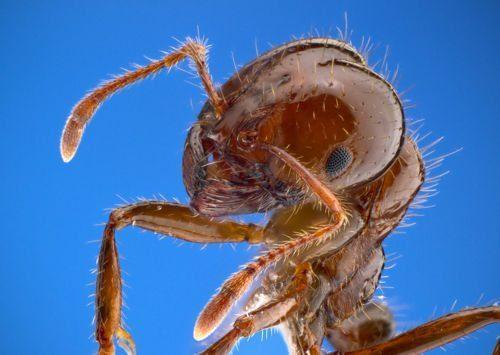 Какие насекомые смертельно опасные для человека - список, фото и описания 6