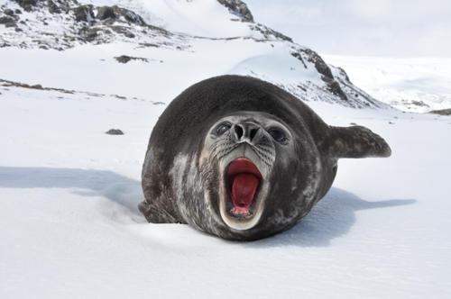 juzhnyj-morskoj-slon