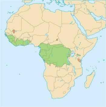 areal-obitanija-afrikanskoj-zolotoj-koshki