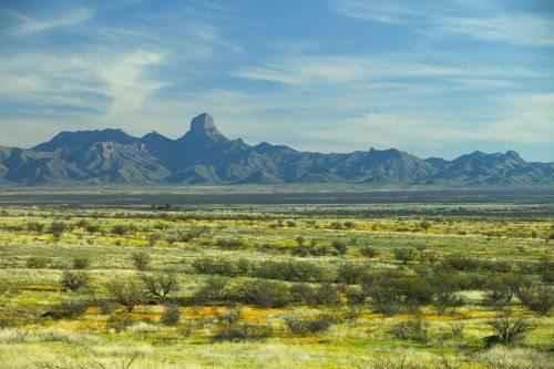 biom-pustyni