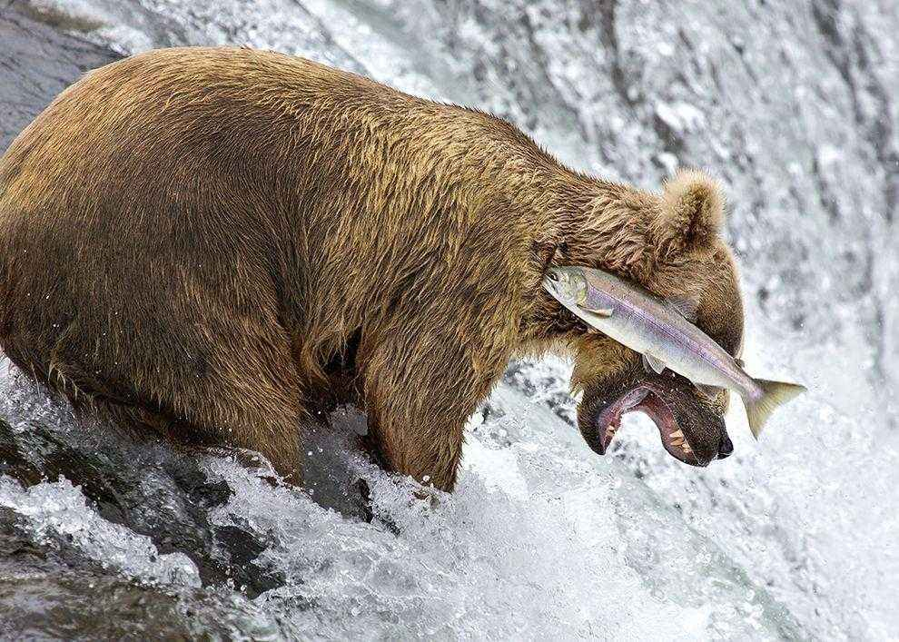 medved-i-ryba