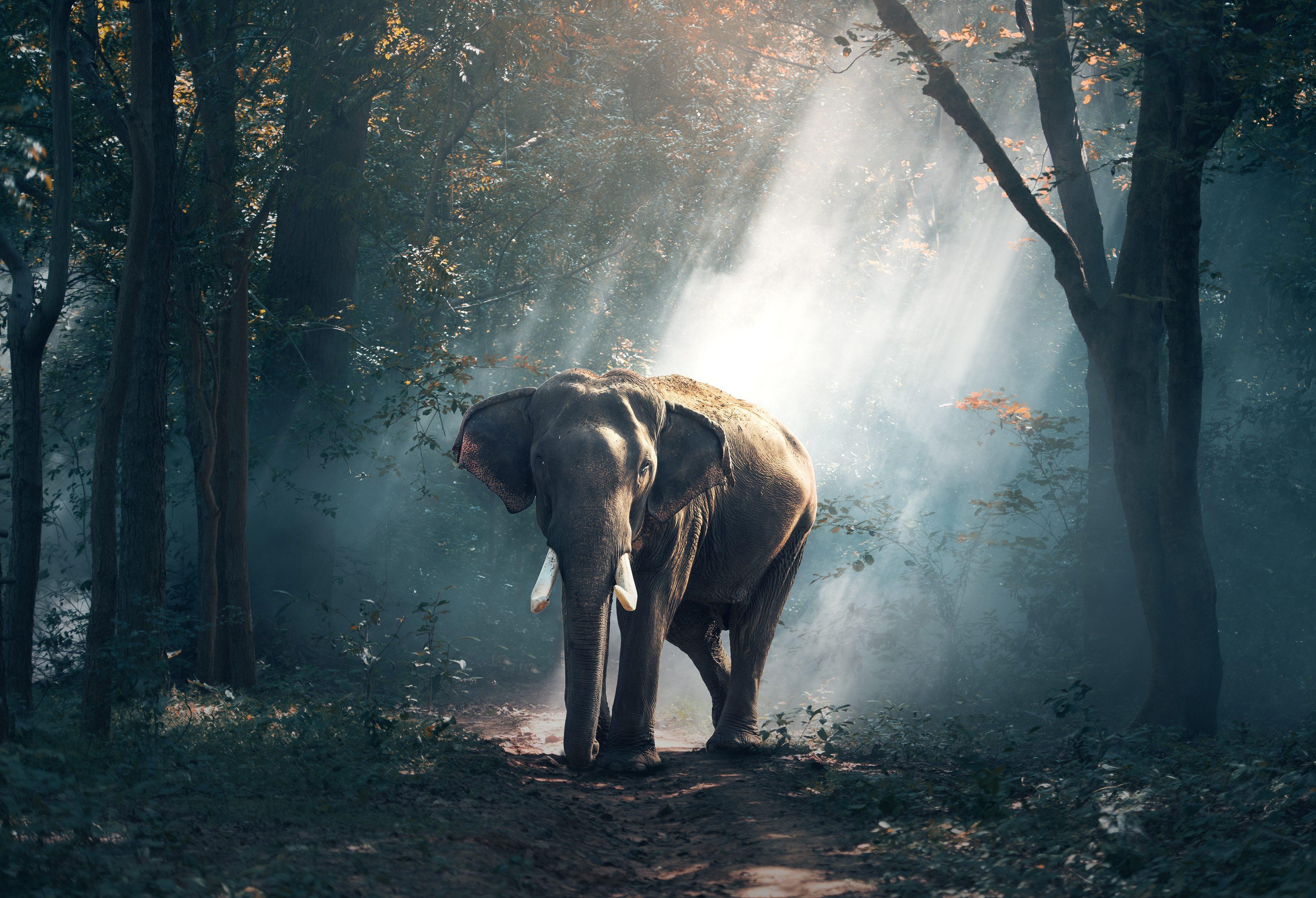 слон, лес, лучи солнца, деревья, животные, растения