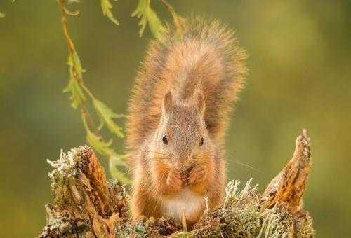 Животный и растительный мир лесостепи - характеристика, список, названия и фото 8
