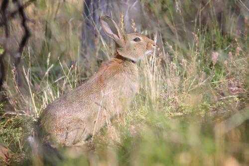 Травоядные, или растительноядные животные: особенности, список, виды и фото 7