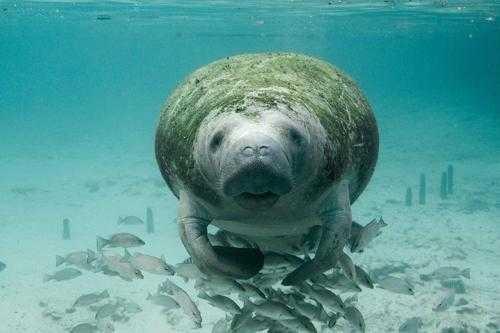 Самые известные представители животного мира Тихого океана 3