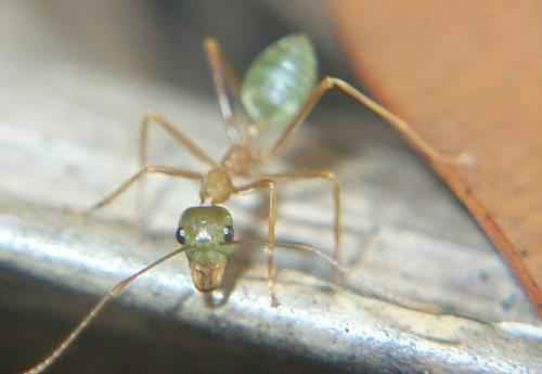 Самые интересные факты про муравьев 12