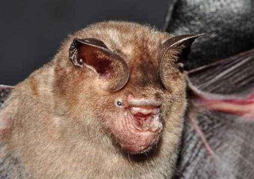 Самые страшные животные в мире - названия, описание и фото 3