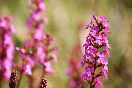 Плотоядные растения - виды, названия, питание, описание и фото 4