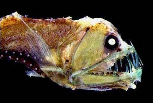 Самые страшные животные в мире - названия, описание и фото 8