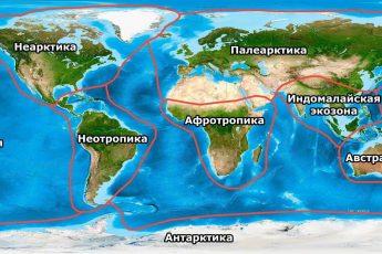 Экозоны, царства, биогеографические зоны, мир, планета, Земля, карта, схема, границы, названия, Неарктика, Палеарктика, Афротропика, Индомалайская зона, Австралазия, Неотропики, Океания, Антарктика
