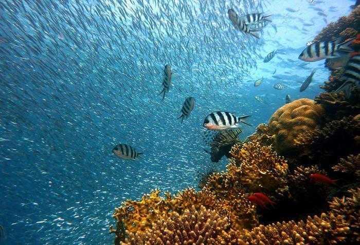 Особенности, краткое описание и группы водных животных 3
