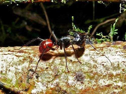 Самые интересные факты про муравьев 8