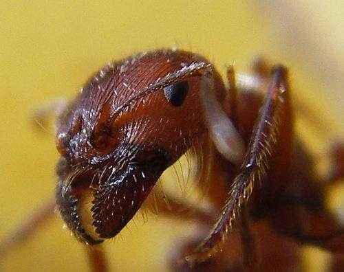 Самые интересные факты про муравьев 2