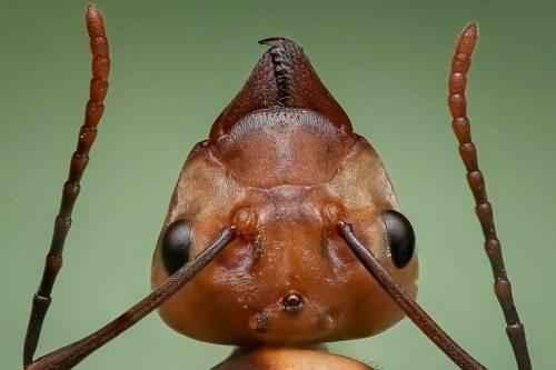 Самые интересные факты про муравьев 3