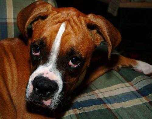 Как избавиться от запаха собаки и других питомцев в квартире 2